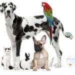 Több pénz jut az állatok védelmére