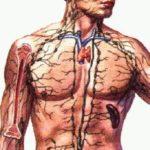 Egyre több az élő donoros szervátültetés