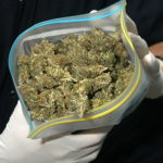 Nagy mennyiségű marihuánát találtak